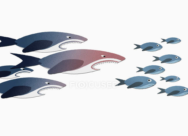 Sharks chasing small fish over white background — Stock Photo