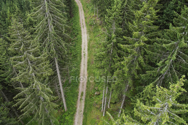 High angle view of dirt road amidst evergreen trees — Stock Photo