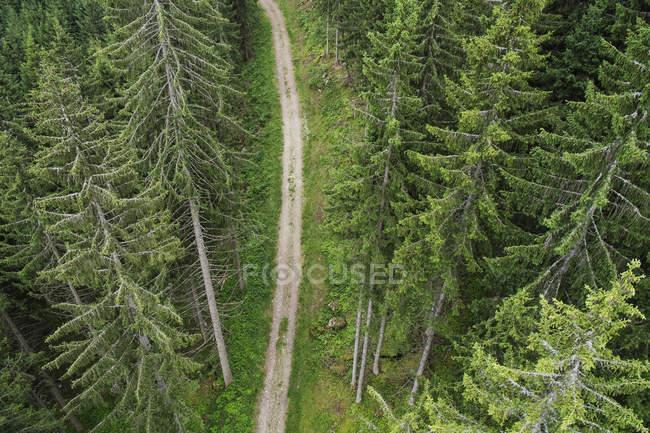 Vue en angle élevé du chemin de terre au milieu des arbres sempervirents — Photo de stock