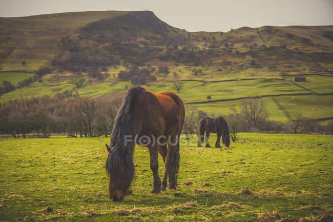 Chevaux paissant sur terrain herbeux pays à highland — Photo de stock