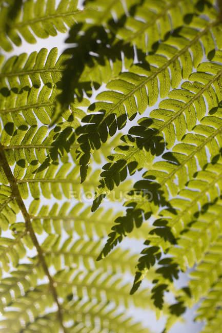 Повний кадр пострілом з листям — стокове фото