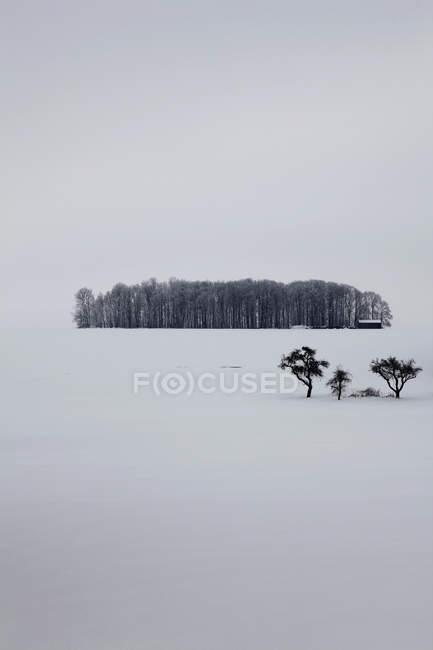 Tranquila escena de bosques en medio de paisajes nevados - foto de stock