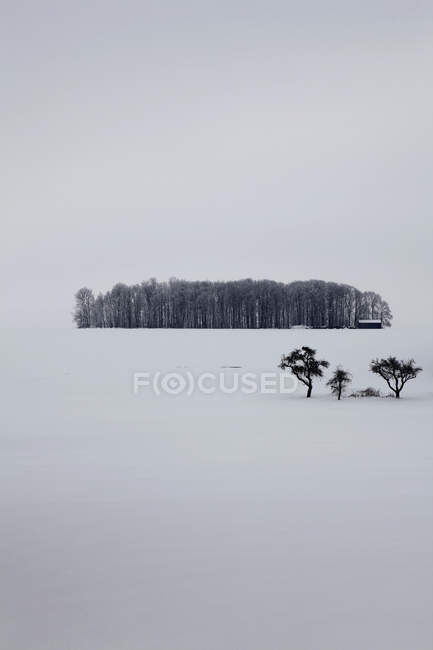 Tranquil scene of woods amid of snowy landscape — Stock Photo