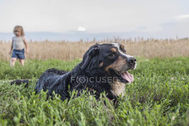 Бордер Колли отдыхает на поле с девушкой на заднем плане — стоковое фото