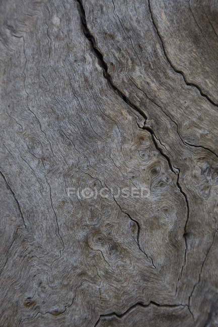 Full frame shot of tree trunk surface — Stock Photo