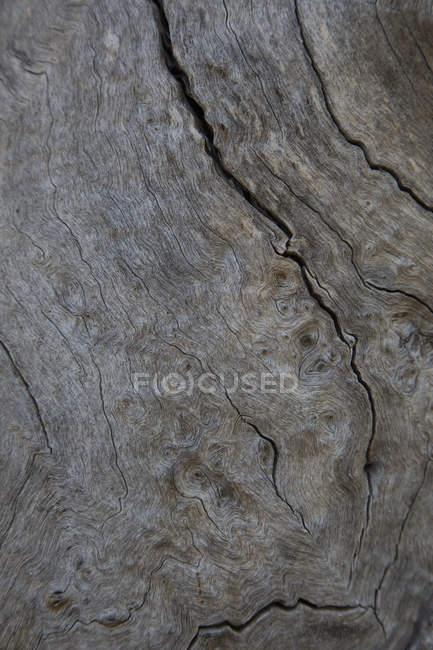 Повний кадр постріл поверхні стовбур дерева — стокове фото