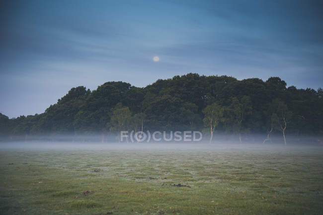 Trees on field in foggy weather at dusk — Stock Photo