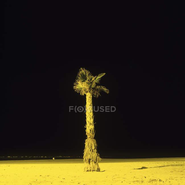 Одинокая пальма на пляже при искусственном освещении ночью — стоковое фото