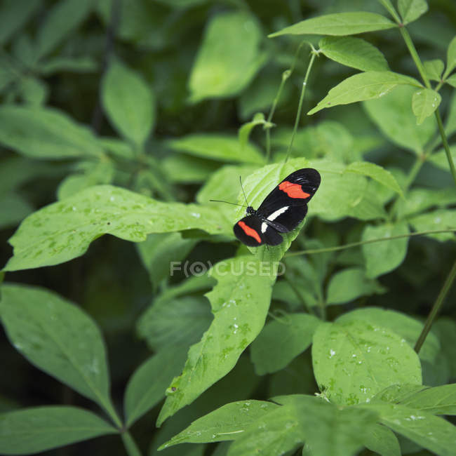 Close up view of butterfly sitting on green leaf — Stock Photo