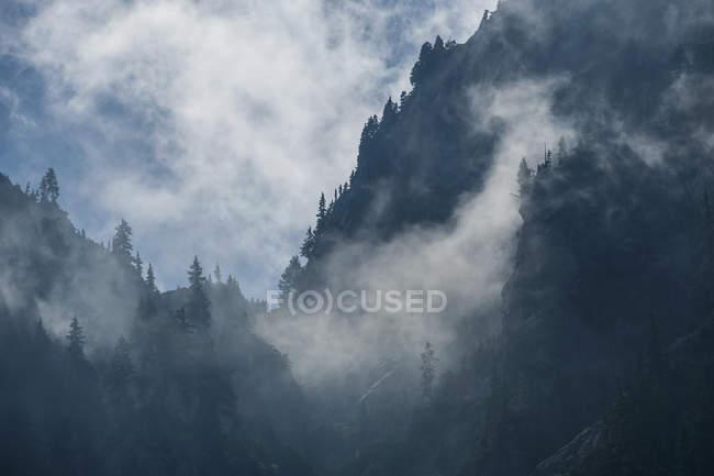 Paisaje escénico del bosque en laderas de montaña cubierto de neblina de la mañana - foto de stock