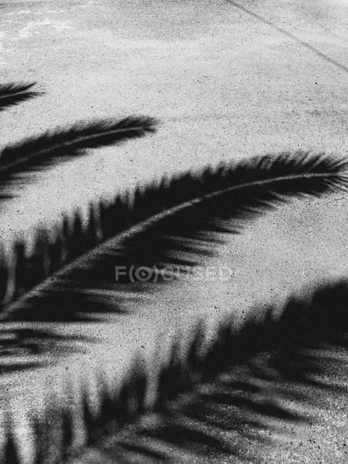 Palm sombra de ramos de árvore em pé do lado — Fotografia de Stock