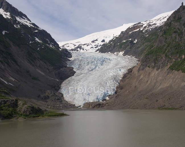 Ведмідь льодовик, Британська Колумбія, Канада — стокове фото