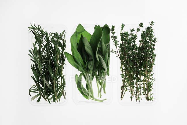 Directamente sobre la vista de las hierbas en recipientes sobre fondo blanco - foto de stock