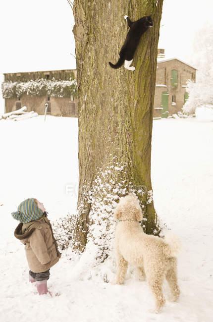 Кішка сходження на дерево і дитина дівчина з Португальська водяний собака дивитися взимку — стокове фото