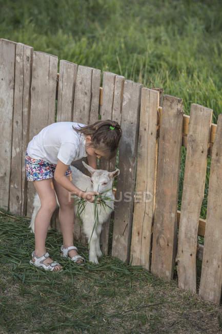 Giovane ragazza alimentazione capra bambino — Foto stock