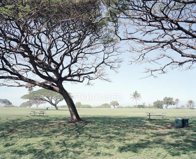 Paisagem de campo enevoado, com enorme árvore em primeiro plano — Fotografia de Stock