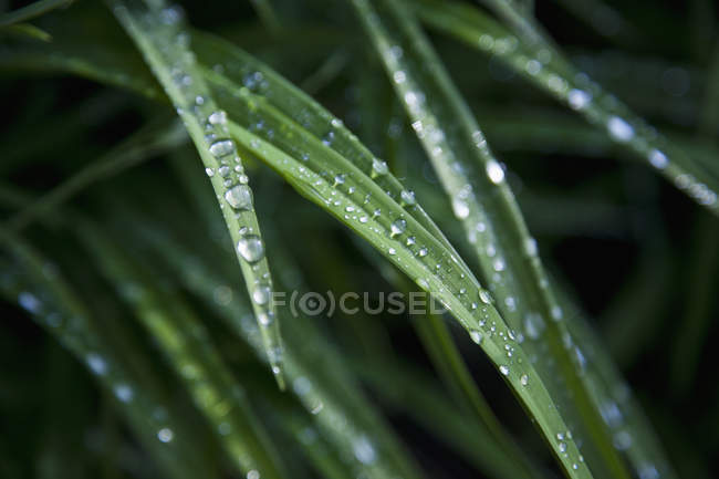 Close up view of raindrops on leaves — Stock Photo