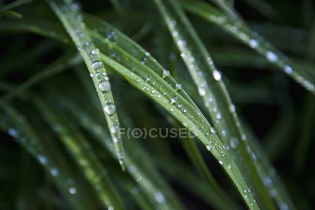 Close-up vista das gotas de chuva nas folhas — Fotografia de Stock
