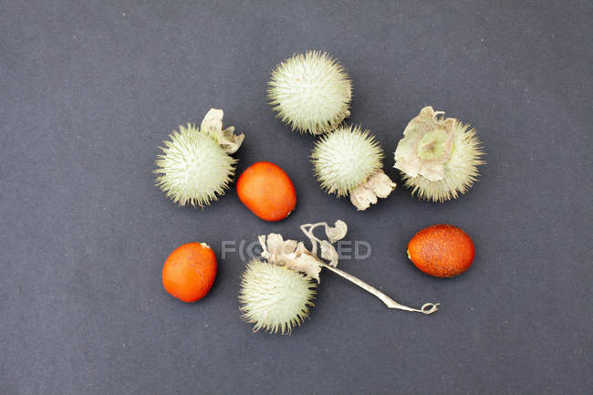 Kumquat and datura plant fruits on gray background — Stock Photo