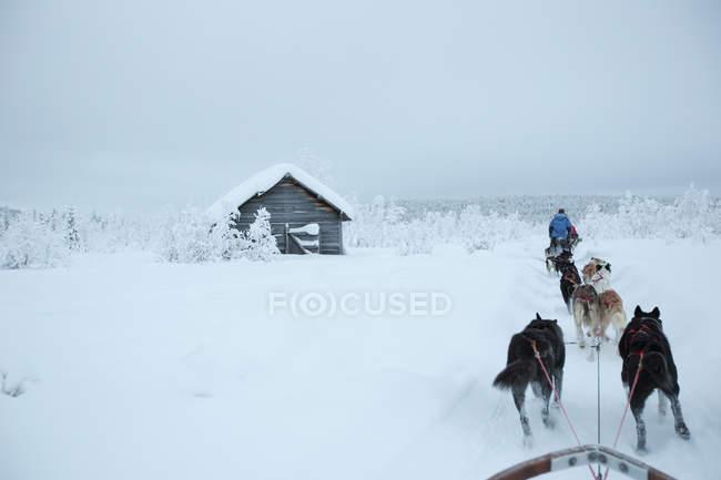 Vista posteriore dei cani da slitta sul paesaggio innevato contro il cielo — Foto stock