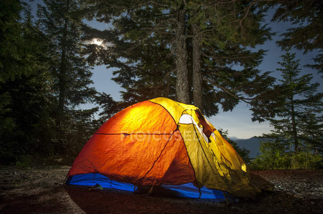 Illuminated camping tent against trees in forest — Stock Photo