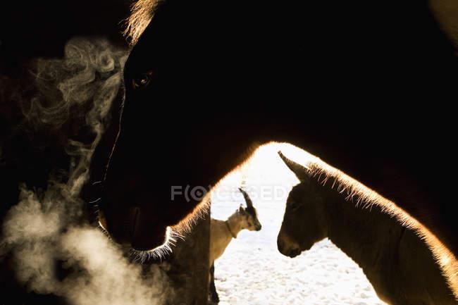 Животных в сарае на ферме в утро — стоковое фото