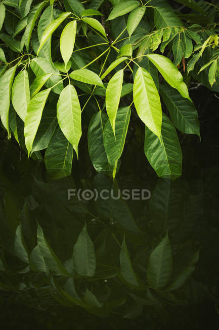 Riflessione delle foglie in acqua — Foto stock