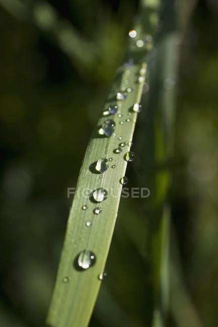 Extreme close up view of raindrops on blade of grass — Stock Photo