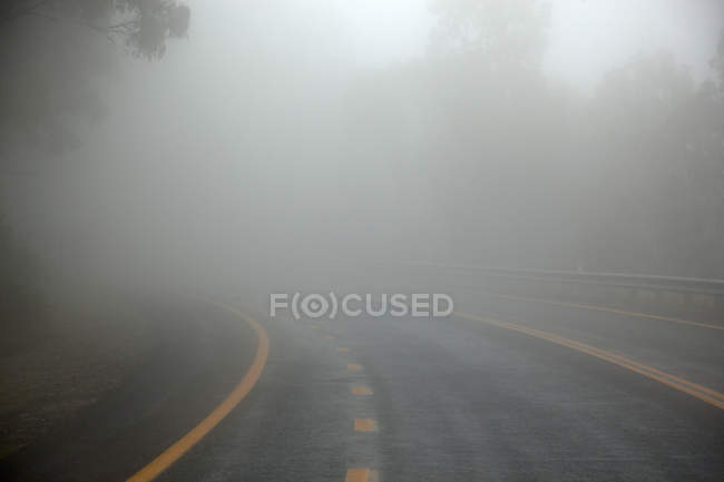 Misty asphalt road in deep green forest — Stock Photo