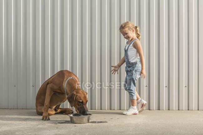 Menina feliz olhando para a alimentação do cão em recipiente contra a parede ondulada — Fotografia de Stock