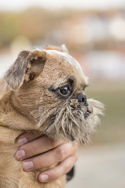 Gros plan de la main recadrée tenant chien à la nature — Photo de stock