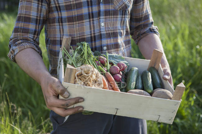 Midsection of man carrying crate of freshly harvested vegetables at garden — Stock Photo