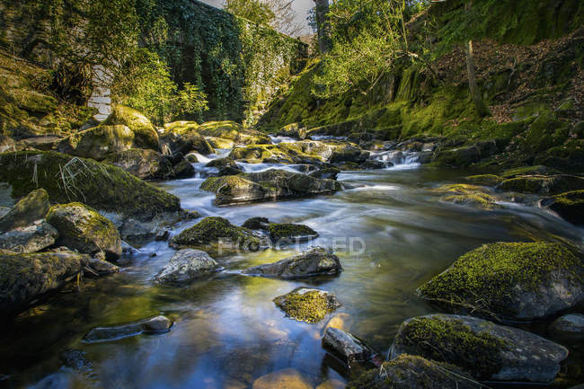 Forest river flowing through mossy rocks — Stock Photo