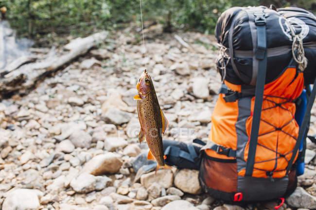 Peces colgando del gancho de pesca de mochila en a orillas del lago - foto de stock