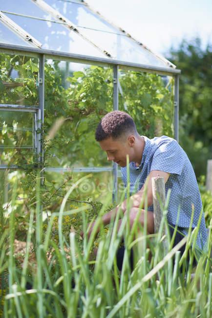 Молода людина, садівництво розплідники заводі — стокове фото