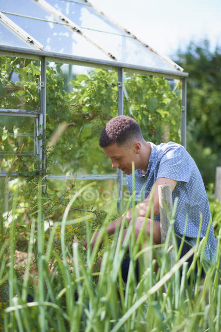 Young man gardening in plant nursery — Stock Photo