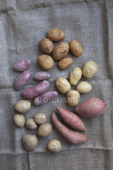 Directamente encima de la inyección de varias patatas en el saco - foto de stock