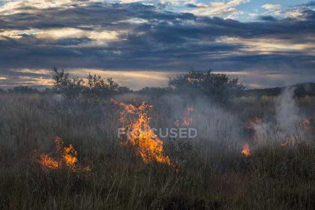 Пейзаж поля с горящей сухой травы в поле — стоковое фото