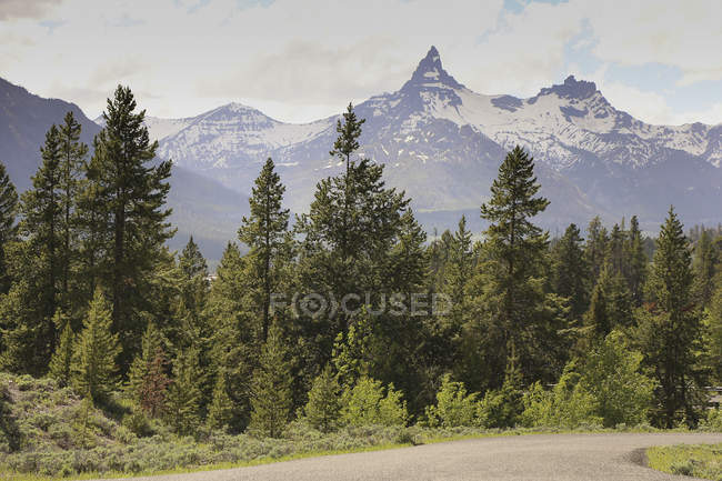 Landscape of fir trees growing on background misty mountains — Stock Photo