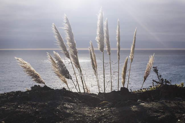 Hierba seca iluminado sobre fondo de paisaje tranquilo - foto de stock