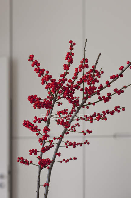 Branch of redcurrants against tiled wall — Stock Photo