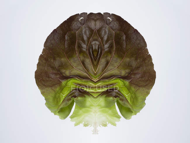 Composite of mirrored of lettuce leaves on white backdrop — Stock Photo