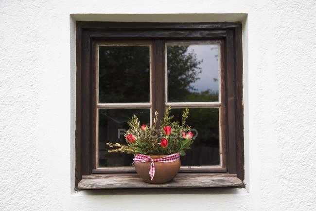 Topfpflanze auf der Fensterbank — Stockfoto