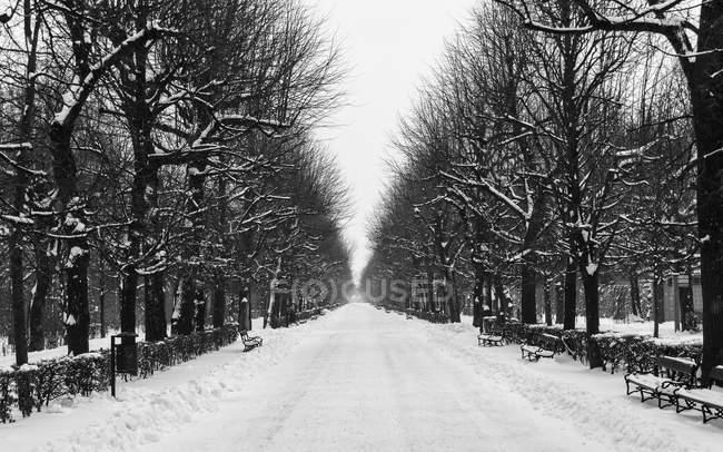 Schneebedeckte Straßen und kahle Bäume im Winter — Stockfoto