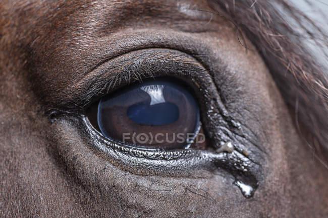 Закрыть глаза и слезы лошади — стоковое фото