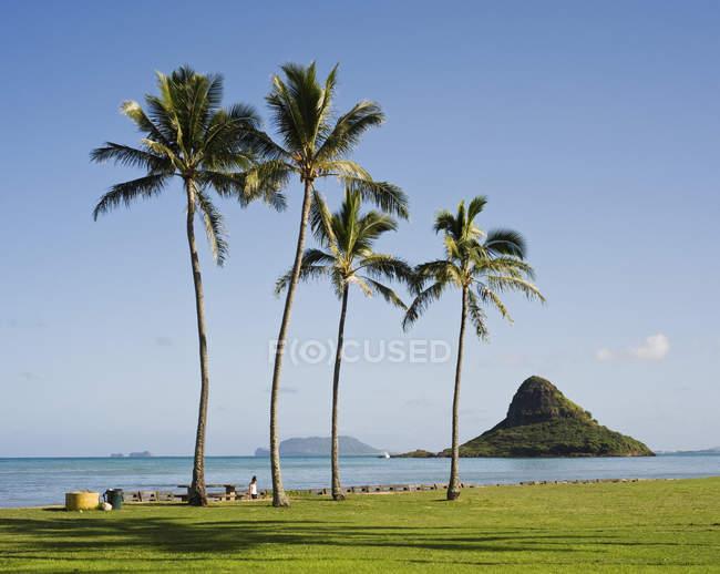 Idílico paisaje con palmeras tropicales en paisaje marino - foto de stock