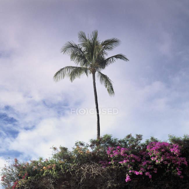 Palme und üppiger Vegetation über klaren Himmel — Stockfoto