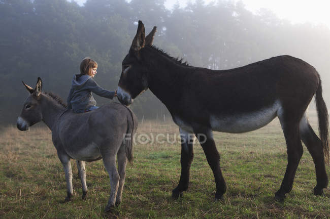 Rear view of girl touching mule while sitting on donkey at field — Stock Photo