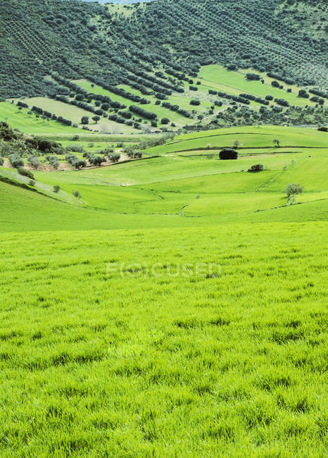 Tranquil scene of rural sunlit grassland — Stock Photo