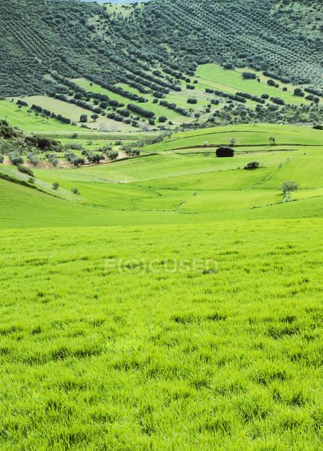 Спокойной сцена сельских утренней пастбищ — стоковое фото